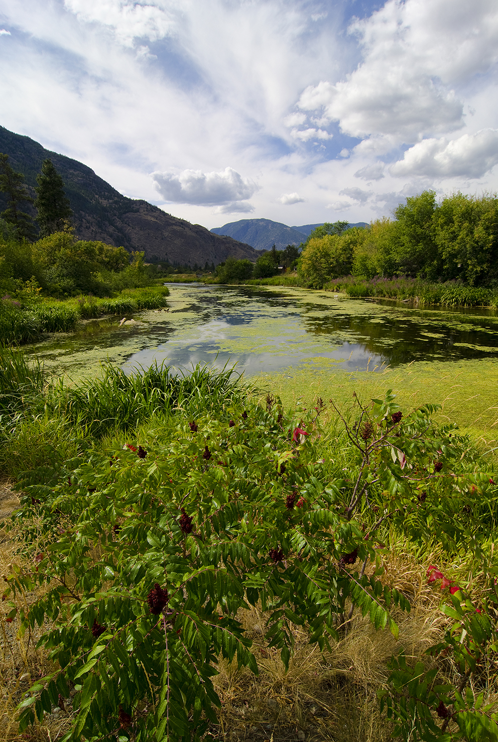 Parkland in the Similkameen